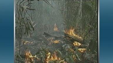Estados no Norte entram alerta conta incêndios - Governo declara estado de emergência ambiental; Ato facilita contratação temporária de brigadistas pelo Ibama.