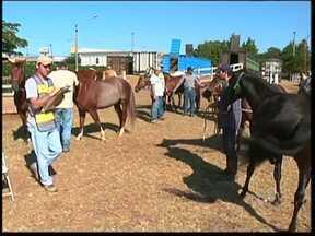Saída de cavalos de parque de Avaré, SP, deve ser concluída nesta 6ª feira - Ao todo, são aproximadamente 1,6 mil cavalos que chegaram ao parque para participarem de competições realizadas entre os dias 15 e 21 de abril. Cavalos estavam confinados no Parque Fernando Cruz Pimentel, em Avaré (SP), após casos suspeitos de mormo.