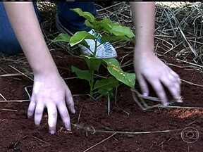 Plantação de árvores se torna solução para mitigar efeito estufa - Especialistas usam a chamada calculadora de CO2, que faz a conversão dos gases emitidos em árvores que precisam ser plantadas para compensar o dano. É possível fazer a conta para qualquer atividade, e já tem quem faça isso, como a Iniciativa Verde.