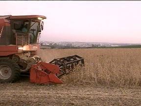 Produtores de soja de SC comemoram a boa safra - A expectativa é colher mais de 600 mil toneladas do grão.