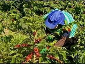 Colheita do café arábica movimenta economia em Minas Gerais - Com o início da colheita no maior produtor do grão no país, a demanda por mão-de-obra é grande. Trabalhadores rurais aproveitam para tirar um dinheirinho extra e realizar alguns sonhos.