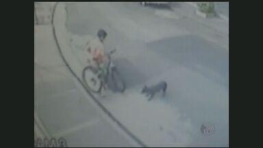 Câmeras de segurança flagram furto de bicicleta em São Paulo - Um rapaz passeava com um cachorro em São Paulo, até quando ele para, amarra o animal, sobe em uma lixeira, pula o muro de uma casa e furta uma bicicleta.