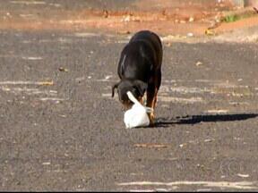 'Cães são arremessados na porta da APA', diz membro de conselho - Veterinária falou sobre os problemas que os animais jogados nas ruas estão expostos.
