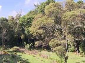 As áreas verdes intactas da capital (parte 1) - Dentro das cidades ainda é possível encontrar matas nativas ou recuperadas -são as reservas particulares do patrimônio natural de Curitiba. Desde 2006, já são 12 espalhadas pela capital.