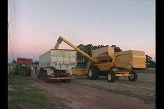 Os produtores que plantaram a soja intensificam a venda do grão - O aumento do dólar contribui para a valorização da mercadoria que aos poucos vai deixando os armazéns.