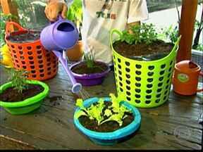 Aprenda a cultivar uma horta de chás - O agrônomo Marcos Victorino dá dicas de como driblar a falta de espaço com recursos baratos. Uma das dicas é usar bacias grandes com rodízio de geladeira aparafusados ou sacolas plásticas e escorredores para cultivar as ervas.