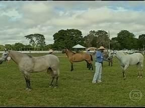 Cavalo pantaneiro é destaque na 12ª edição da feira agropecuária de Poconé (MT) - Os criadores do cavalo pantoneiro estão reunidos em Poconé, Mato Grosso. A raça é destaque na 12ª edição da feira agropecuária do município.