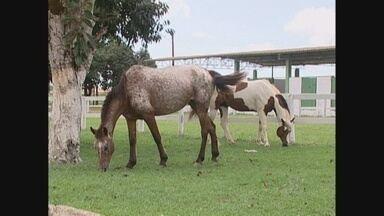 Cavalgada de abertura da Festa Agropecuária de Vilhena é cancelada por doença em equinos - A doença foi registrada na área rural de Cujubim, esse foi o primeiro caso de Rondônia. O cancelamento da cavalgada foi definido para prevenir a possível epidemia da doença.
