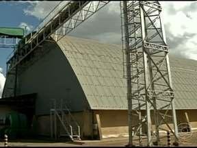 Falta armazéns para os produtores de milho em Mato Grosso - A queda na cotação do milho, em Mato Grosso, virou um problema para os produtores rurais. Sem armazéns para estocar os grãos, eles não têm como segurar a safra para esperar uma recuperação do mercado.