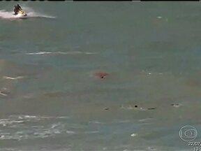 Jovem é atacada por tubarão e morre no Recife - Uma jovem turista morreu na madrugada desta terça-feira (23), depois de ser atacada na última segunda-feira por tubarão na praia de Boa Viagem, Recife.
