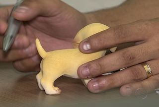 Corte de cauda de animal é proibido em Sergipe - Especialistas dizem que mutilação pode gerar sérios problemas.