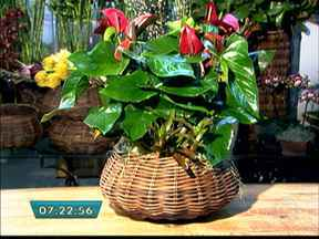 Arranjos de flores podem decorar e presentear no Dia dos Pais - Presente para homem não é só gravata, meia, camisa e sapato. Pais também combinam com flores. Veja como fazer alguns arranjos para o dia dos pais.