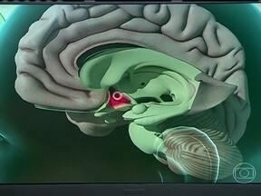 Estresse pode se transformar em problema se não for cuidado - O estresse é uma reação do organismo para nos proteger. As amígdalas cerebrais detectam uma ameaça e acionam o hipotálamo, que dará o sinal para liberar os hormônios do estresse.