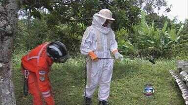 Bombeiros explicam como se proteger de um ataque de abelhas - Em São Bento do Una, enxame causou pânico na cidade no fim de semana.
