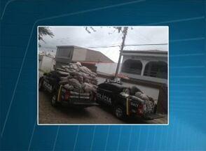 Mais de quatro toneladas de maconha são apreendidas no Sertão - Segundo o coronel da PM, duas pessoas, pai e filho, foram autuadas em flagrante por tráfico e associação para o tráfico.