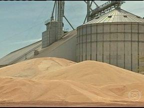 Agricultores do norte do MT esperam reação no preço do milho safrinha para vender a safra - O excesso de oferta do grão com o fim da colheita na região, fez o preço cair. Agricultores estão segurando a produção nos armazéns na expectativa de um aumento.