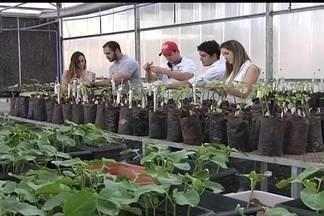 Profissão valorizada - Profissionais ligados à agronomia ganham espaço à medida que o agronegócio se fortalece. No Noroeste do Estado, os canaviais e os seringais são os principais polos de atração da mão-de-obra