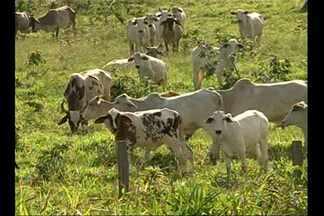 Mais de 200 mil propriedades no Pará ainda não realizaram o cadastro rural - Prazo para fazer o cadastro termina em dezembro.