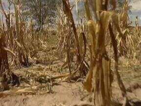 Municípios piauienses estão em situação de emergencia por conta da seca e ajuda não chega - Situação de emergencia é decretada em muitos municípios piauienses por conta da seca