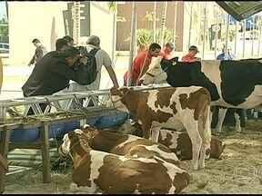 Criadores de gado participam do PEC Nordeste em Fortaleza (CE) - O evento é um dos principais encontros da pecuária de corte e de leite da região. Uma das preocupações deste ano é disseminar técnicas de convívio com a seca.