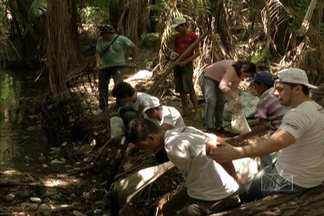 Em São Luís, voluntários fizeram um trabalho de limpeza na Reserva do Itapiracó - A ação de preservação do meio ambiente está sendo realizada em cento e vinte e cinco países.