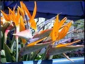 Petrópolis, RJ, recebe Festival das Flores - Cidade é a terceira maior produtora de flores do estado.