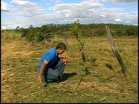 Série 'Árvores do Cerrado', da TV Integração, chega ao fim em Divinópolis - Reportagens foram exibidas ao longo da semana no MGTV. Conheça um exemplo de que é possível tratar bem a natureza