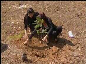 Empresas de Palmas distribuíram e plantaram mudas pelo dia da árvore - Empresas de Palmas distribuíram e plantaram mudas pelo dia da árvore