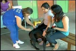 Nova Friburgo, RJ, realiza vacinação antirrábica em cães e gatos - Município disponibilizou 35 pontos de vacinação.Cerca de 12.300 cães e 2.600 gatos foram imunizados.