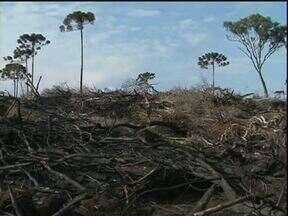 Espécies ameaçadas de extinção são destruídas em desmatamento na Serra da Esperança - IAP descobriu a área de desmate durante fiscalização de rotina. Milhares de árvores foram derrubadas em área de preservação ambiental.