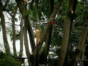 Operário leva choque durante poda de árvore na Zona Sul de SP - Na manhã desta terça-feira (1º), um funcionário que prestava serviço para a Prefeitura de São Paulo levou um choque durante a poda de uma árvore na Rua Uruana, na Vila Mariana, na Zona Sul. Ele foi levado para o hospital e está fora de perigo.