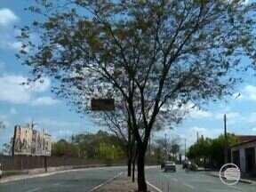 Árvores morrem por conta do forte calor e escassez da chuva - Árvores morrem por conta do forte calor e escassez da chuva