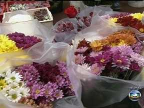 Feriado de finados movimenta a produção de flores em SP - Comerciantes de flores reforçaram o estoque por causa do feriado do próximo sábado (2). Este ano, os agricultores que apostaram no crisântemo devem conseguir um lucro maior no preço do vaso.