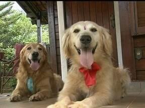 Cães que estavam abandonados em casa do Lago Sul ganham nova vida - Os cachorros estavam abandonados há duas semanas, vivendo em péssimas condições. A polícia ainda não localizou o dono do suspeito que seria dono dos animais.