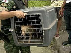 Cães são resgatados de clínica veterinária em Belo Horizonte (MG) - Segundo a PM, os nove cães passaram quase uma semana sem comida e sem água. Os policiais ainda encontraram dez corpos de cachorros num congelador.