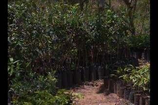 Grupo de jovens produzem mudas de plantas e doam a moradores em Massaranduba, PB - Mudas ajudam no processo de revitalização da área.