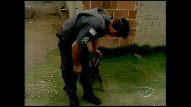 Dono leva cão em roubo e é preso após animal ser visto em vídeo no ES - Após a prisão, o animal acompanhou o dono até à delegacia.Os suspeitos foram levados para a Penitenciária Regional de Linhares.