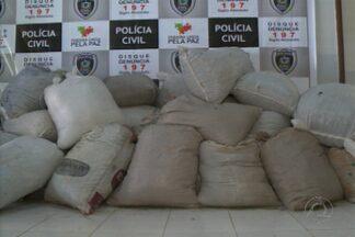 Pesagem da droga apreendida no Cariri chega a quase três toneladas - O IPC pesou oficialmente a droga que foi apreendida em Monteiro, no Cariri do estado.