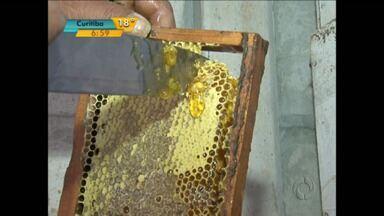 Produção de mel pode ser alternativa para pequenos agricultores - O investimento em novos projetos ajuda a manter os filhos dos agricultores na mesma atividade dos pais.