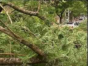 Ventos fortes derrubam árvores em Maringá - De acordo com a estação climatológica da UEM os ventos chegaram a 65 km por hora