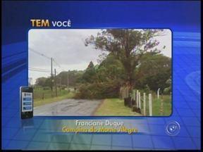 Chuva causa estragos em cidades da região de Itapetininga - A forte chuva e a ventania da tarde desta quinta-feira (5) causaram estragos na região de Itapetininga (SP). Em Campina do Monte Alegre (SP), pelo menos 10 árvores caíram na rodovia Engenheiro Lauri Simões de Barros.