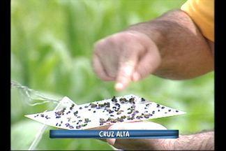 Lagarta da soja preocupa produtores da região - Armadilhas estão sendo instaladas nas propriedades.