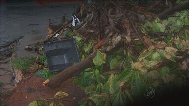 Telespectadores enviam pontos de criadouros do mosquito da dengue em Ribeirão - Denúncias de lixo acumulado podem ser feitas pelo VC no G1.
