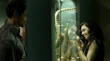 Amores Roubados - Capítulo de quarta-feira, dia 08/01/2014, na íntegra - Leandro desiste de fugir de Antônia e os dois têm primeira noite de amor