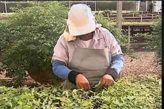 Cresce no Brasil o mercado de produção de mudas nativas - Setor é impulsionado, principalmente, pelo rigor do Novo Código Florestal. Em alguns estados, falta de regulamentação do CAR prejudica os negócios.