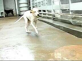 Grupo de defesa dos animais de rua atua há dois anos em Uberlândia - Mais de 300 cachorros e gatos já foram doados pelo grupo Mudar. Atualmente são 60 voluntários e pessoas que doam mantimentos.