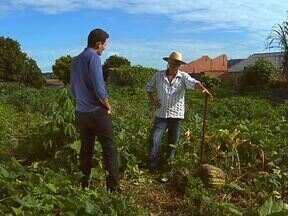 Conheça o agricultor que cuida de terrenos baldios em Santa Helena e produz de tudo - Entre os produtos que ele colhe está uma abóbora gigante que chama a atenção da vizinhança