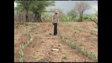 Safra de milho e de algodão 2013/2014 deve ter aumento de produtividade - No caso da soja, o crescimento da produção deve passar dos 60%.