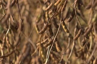 Produtores do PR apressam colheita de soja para plantio do milho safrinha - Estado deve colher nesta safra mais de 16 milhões de toneladas de soja. De acordo com a cooperativa de Cascavel, foram colhidos 4% do total.