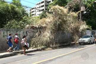 Bambuzal invade calçada e atrapalha pedestres no bairro da Federação - As plantas ficam em um terreno que pertence à UFBA.